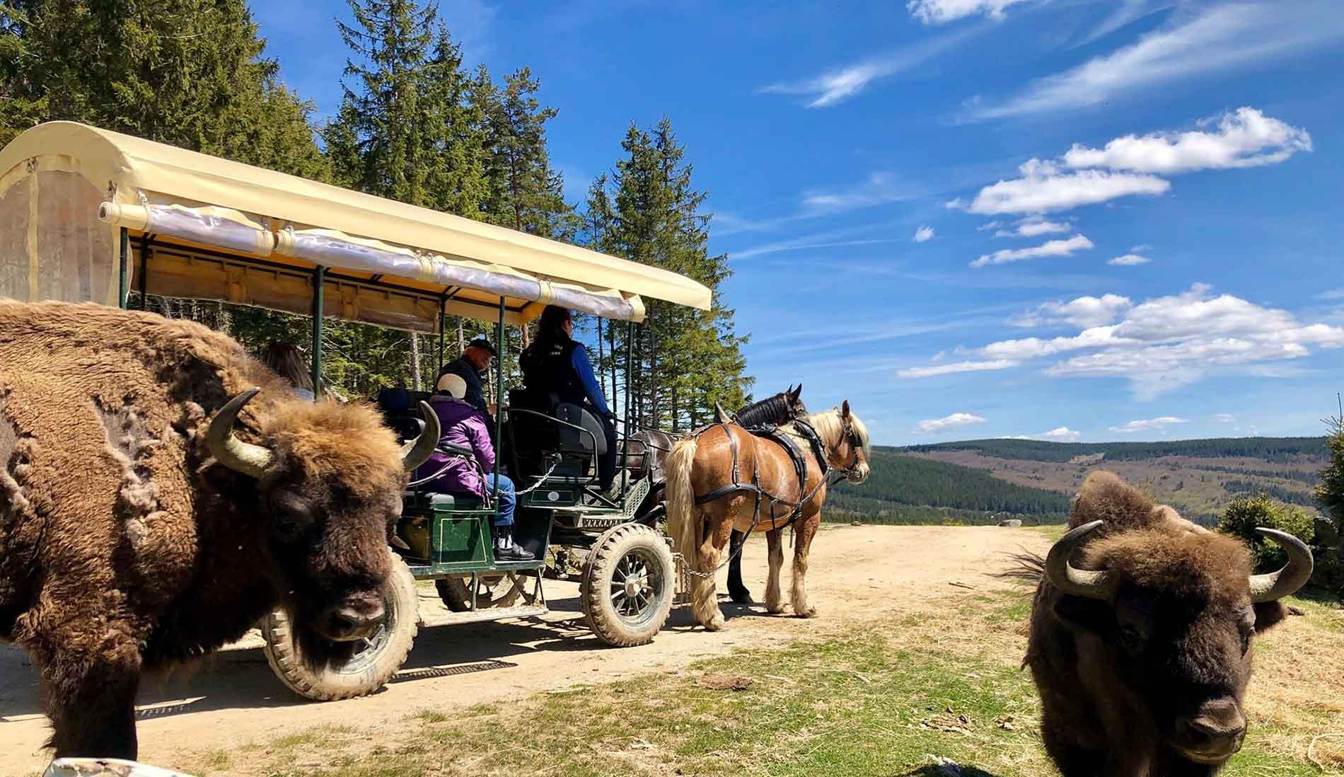 caleche visite parc bison margeride