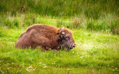 La réserve dans l'émission Bouger Vert de Ushuaïa TV